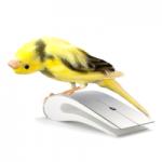 warrant_canary-150x150